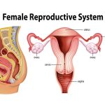 Cancers in the female reproductive organs
